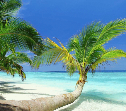 МИНИ СПА Программа Ямайский Кокос